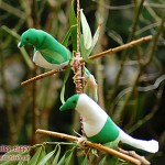 Schnell flügge: Pärchen in grün-weiß. Grünfinken? Polizeifinken?