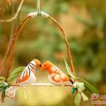 Das romantische orangefarbene Pärchen hat sich gleich die Schaukel gekrallt.