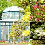 Der maurische Garten mit Magnolienblüten in der Wilhelma