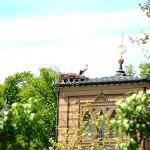 Nochmal maurischer Garten, mit Storch