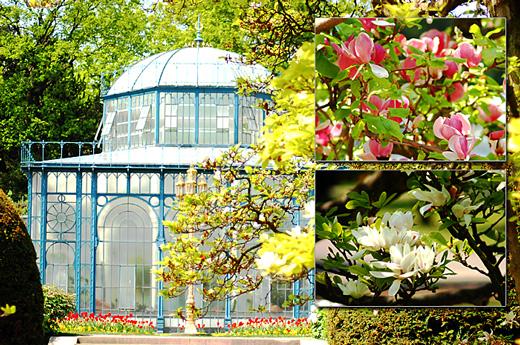 Wilhelma: Alter Maurischer Garten mit Magnolienblüten