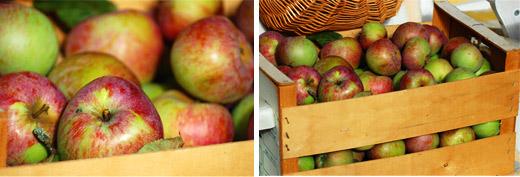 Apfelernte im Tiffy-Garten