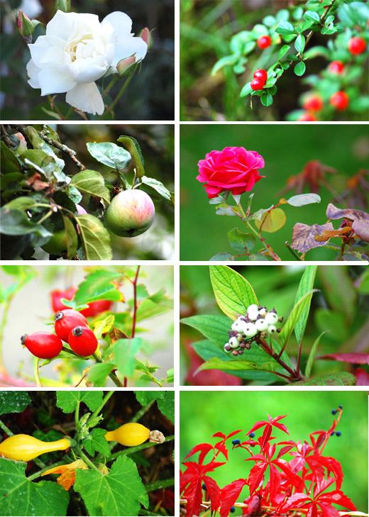 Herbst in Tiffyhausen: Gartenimpressionen