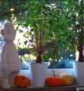 Hübsche helle Kürbisse und kleine orangefarbene - meine Lieblinge :)