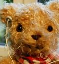 Er gehört zur Gattung der Tiffy-Teddys, erkennbar am Knopfauge.