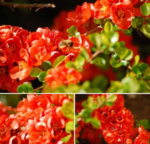 So richtig korallenrot: Blümchen im Garten