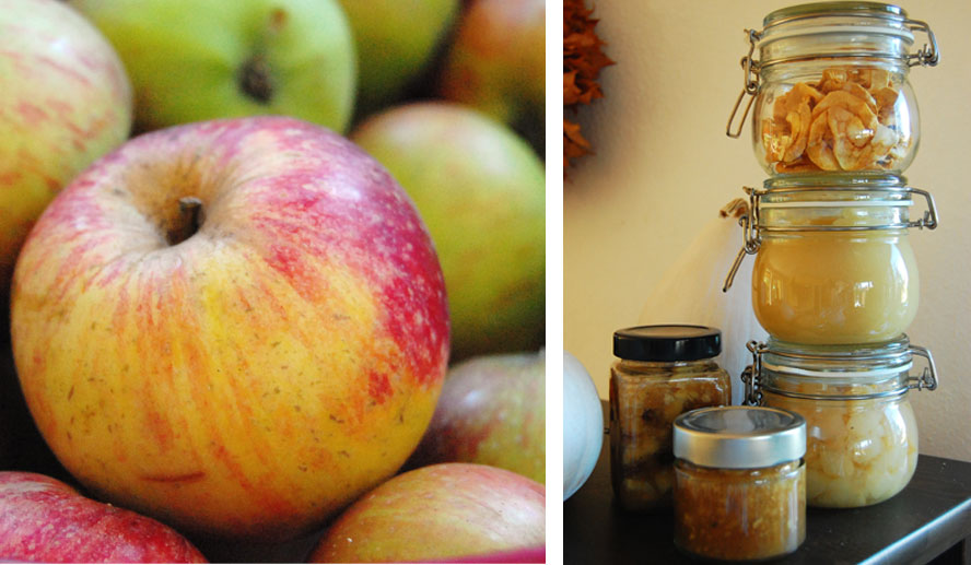 Apfel k rbis herbstbl tter rauschen binenstich for Apfel basteln herbst