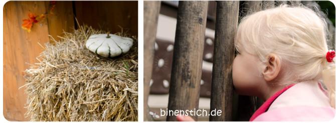 Herbst-Highlight: Kürbisausstellung und Märchengarten | binenstich.de