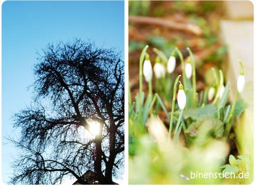 Gute Zeiten: Sonne und erste Frühlingsboten im Garten | binenstich.de