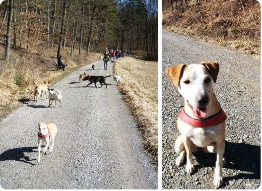 Ausflug für den Vierfüßler: XXL-Gassi mit vielen anderen Hunden aus dem Tierschutz | binenstich.de
